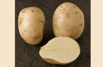 нетемнеющий картофель