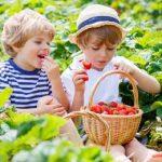 Европа против ГМО в очередной раз