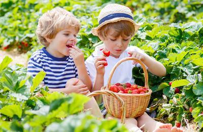 дети едят клубнику