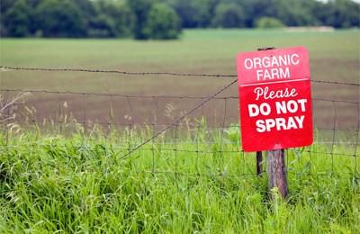 органическая кукуруза