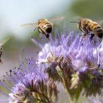 три пчелы