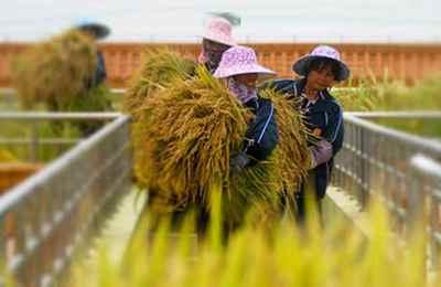 Китай разрешил импорт ГМО