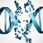 ДНК развалилась