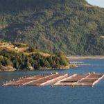завод по производству ГМ-лосося