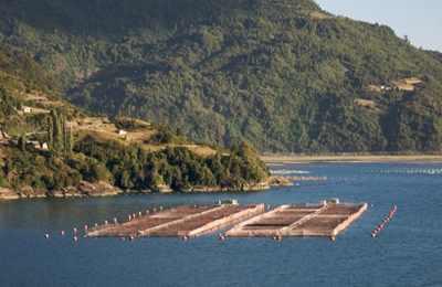 строительство завода по лососю