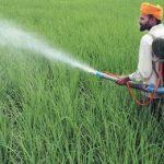 индиец распыляет пестицид