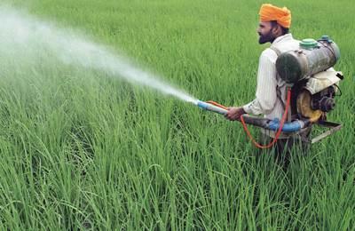 индийский мужчина распыляет пестицид