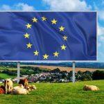 европейский союз и коровы