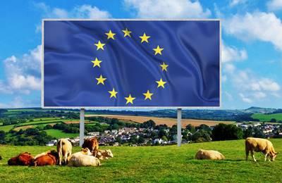 коровы в ЕС