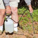 полив глифосатом