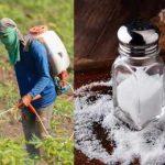 соль и глифосат