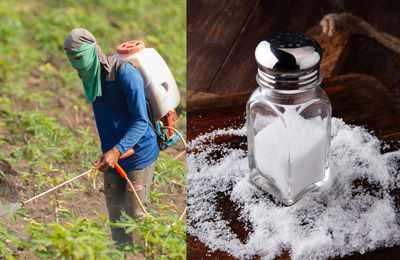 токсичность соли и глифосата
