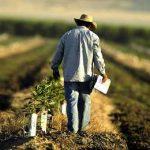 фермер на своем поле