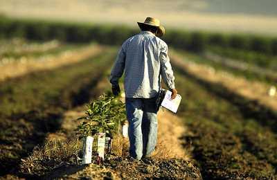 фермер идет по полю