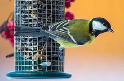 птица возле корма
