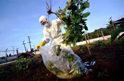 активист против ГМО
