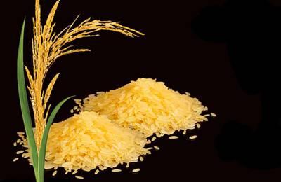 ветка риса и сам рис