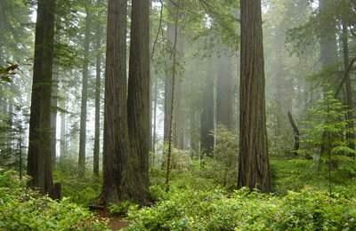 зеленый лес