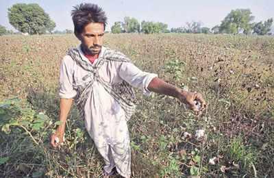 сборщик хлопка в Индии