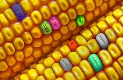 кукуруза crispr