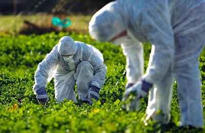 биотехнологи на поле