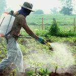 опрыскивание поля химикатом
