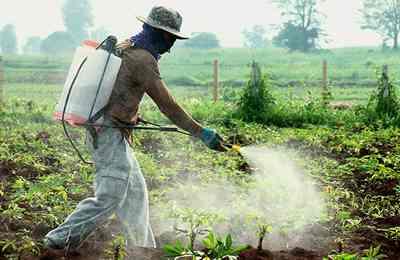 рабочий опрыскивает растения гербицидом