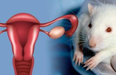 глифосат и фертильность самок крыс