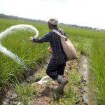 пакистанский фермер
