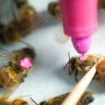 краска для пчел