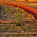 сорняк на железной дороге
