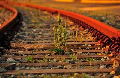 сорняк на железнодорожном полотне