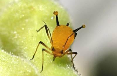 насекомое с вирусом