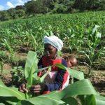африканская женщина с ребенком и кукуруза