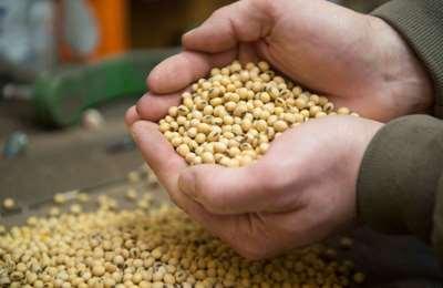 ГМО соя в Украине