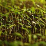 растут растения