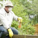 полив растений глифосатом