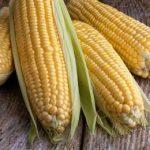 новая кукуруза в Европе