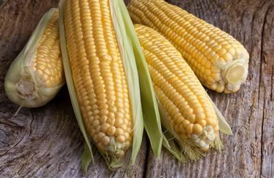 несколько кукурузин на столе