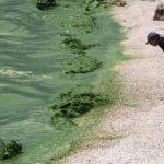 позеленение воды