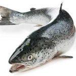 лосось для продажи