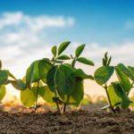 небольшие ростки растения