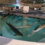 завод по производству ГМО-лосося