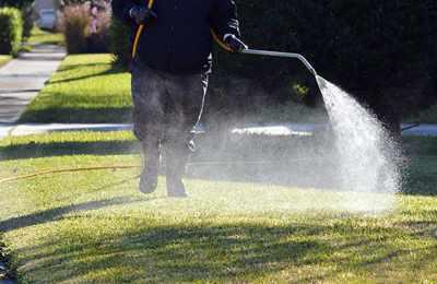 полив гербицидом газона
