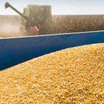 уборка кукурузы с поля