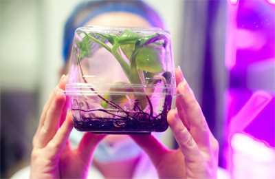 геномное редактирование растений