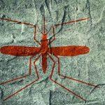 комар на стене