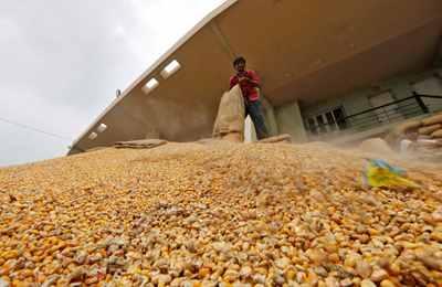 рассыпанная кукуруза