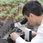 изучение растений на их фоне