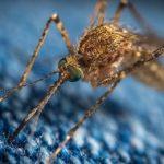 сидит комар